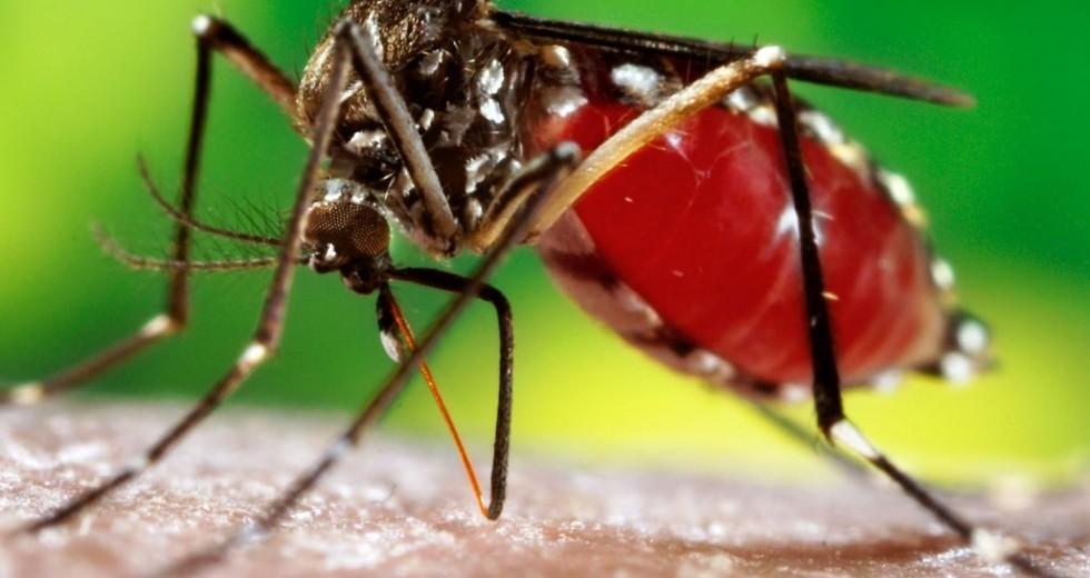 Dengue: Saiba os sintomas e como se proteger.