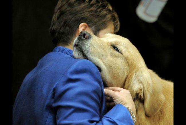 Cachorro treinado em casa: Aprenda como treiná-lo da forma certa