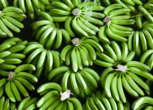 Biomass Caps: Emagrece mesmo? Veja os benefícios do extrato concentrado da biomassa de banana verde aqui!