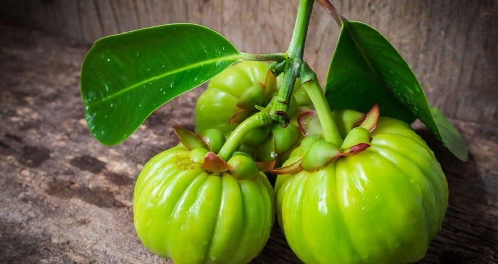 Garcinia Cambogia: Conheça a planta asiática que ajuda a perder peso naturalmente!