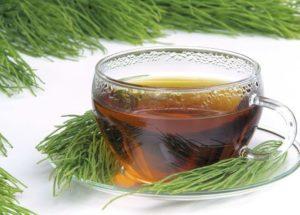 Chá de cavalinha: É emagrecedor? Saiba tudo sobre esse poderoso chá!