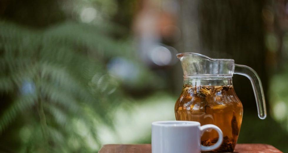 Chá de boldo: Para que serve? Como posso fazer? Faz bem ou mal? Veja!