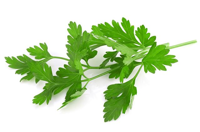 folhas de salsa